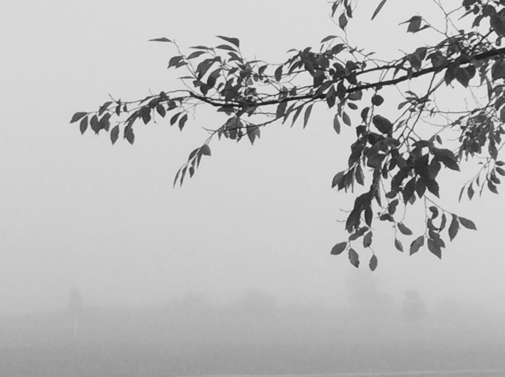 The branch reaches out to the thick fog.