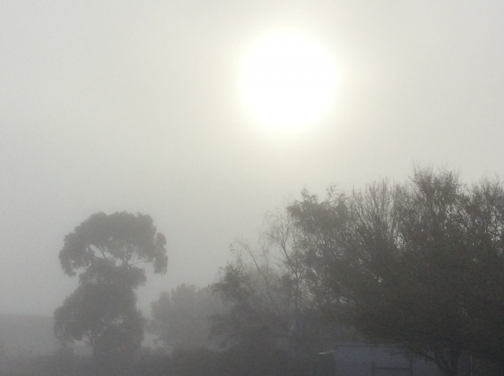 The fog enveloped our school, refusing to let the sun peek in and see us.